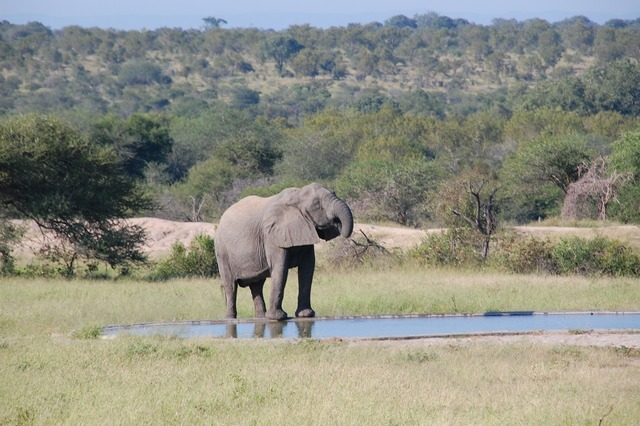 South africa wild nature, nature landscapes.