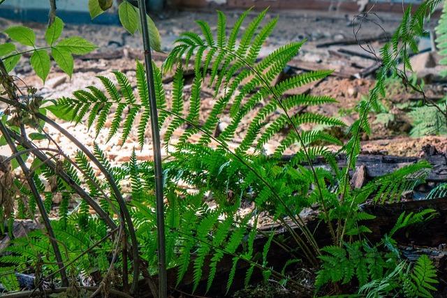Space moss plant, nature landscapes.