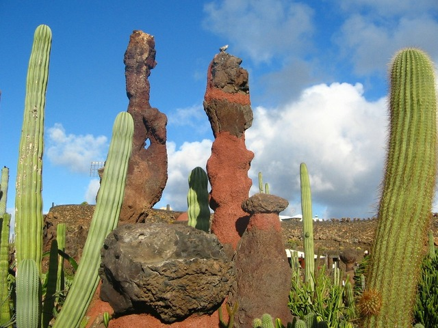 Spain lanzarote cactus garden.