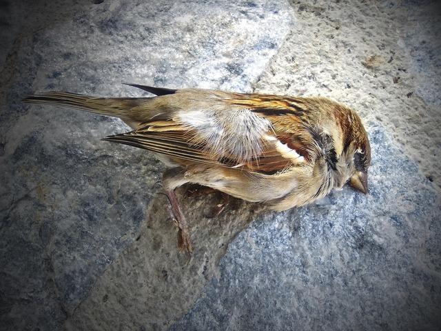 Sparrow dead bird metaphor.