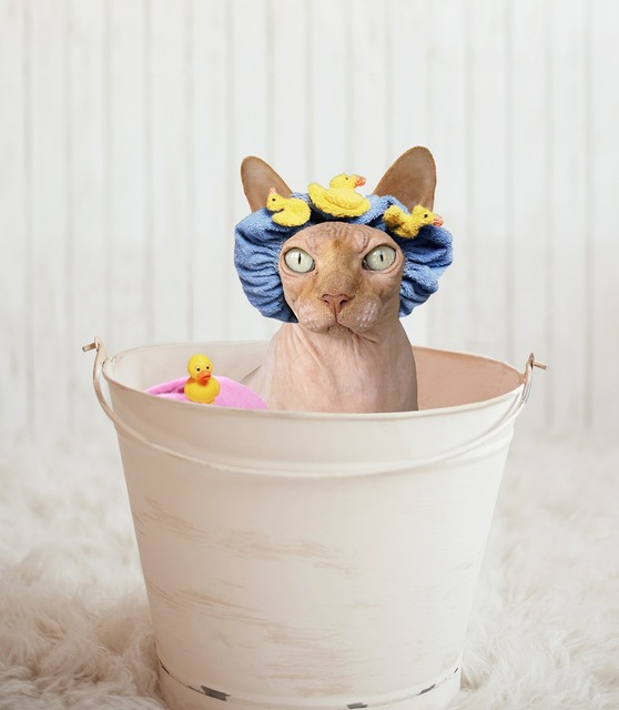 Sphynx cat bathtub, animals.