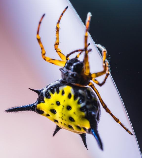 Spider arachnid insect, animals.