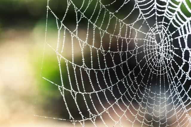 Spider silk bokeh rain, animals.