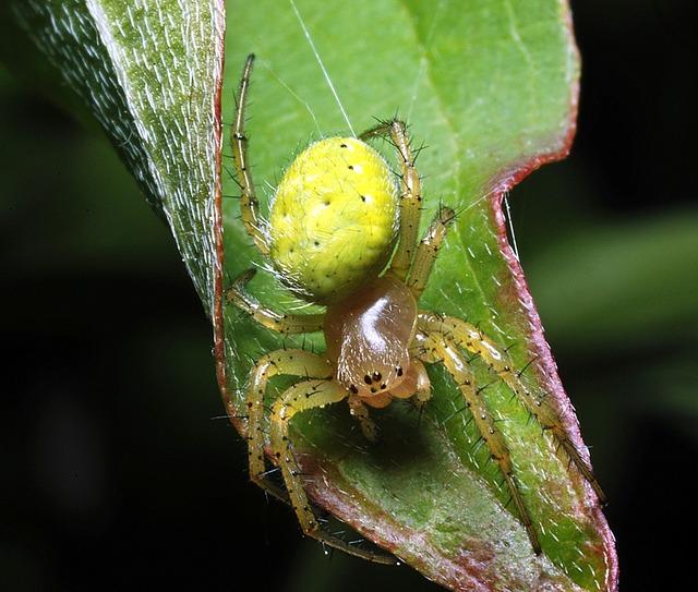Spider spider meadow macro, animals.