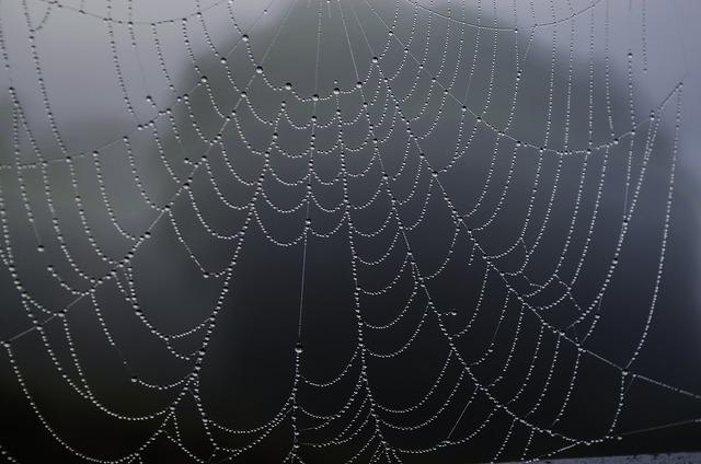 Spider web rosa fog, nature landscapes.