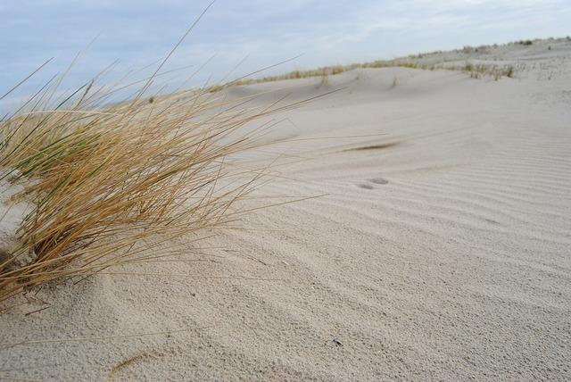 Spiekeroog dunes north sea, travel vacation.