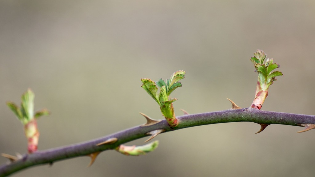 Spring takeshi bud, nature landscapes.