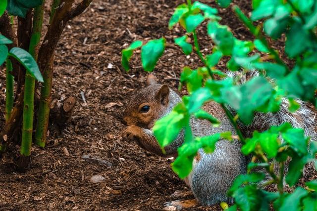 Squirrel canada park.