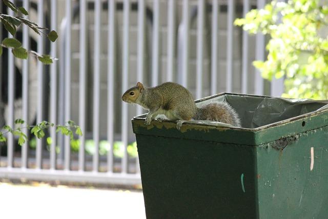 Squirrel trash bin, animals.