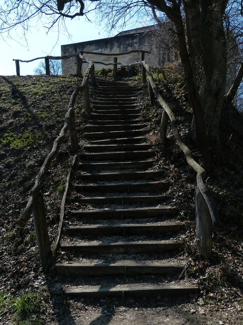 Stairs wood forest, nature landscapes.
