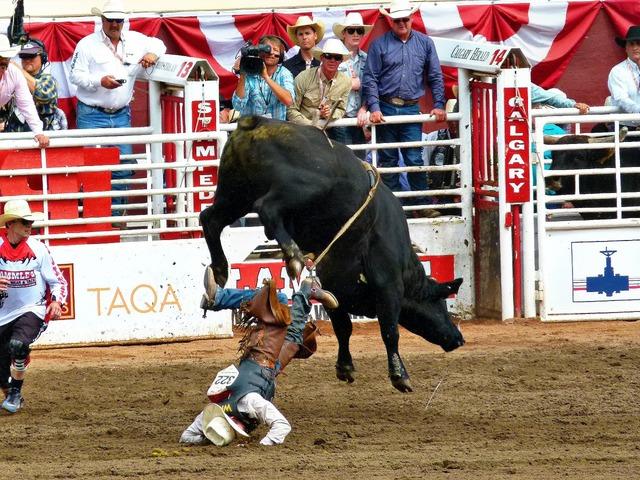 Stampede calgary bull riding.