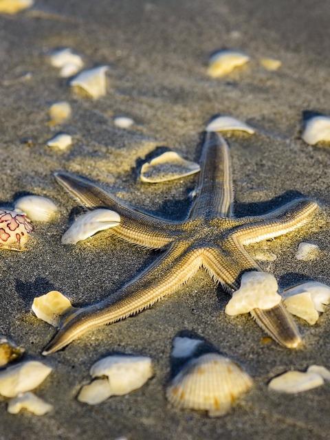 Star fish starfish, travel vacation.