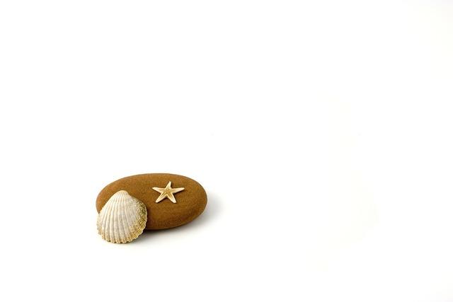 Star fish stranded, travel vacation.