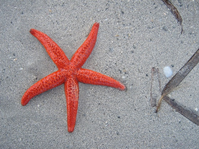 Starfish beach sand, travel vacation.