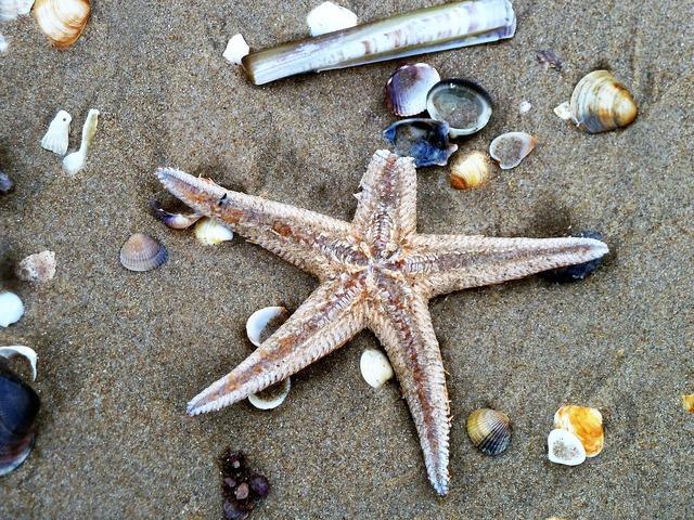 Starfish beach shell, travel vacation.