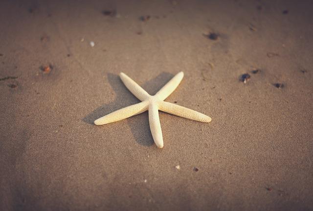 Starfish sand beach, travel vacation.