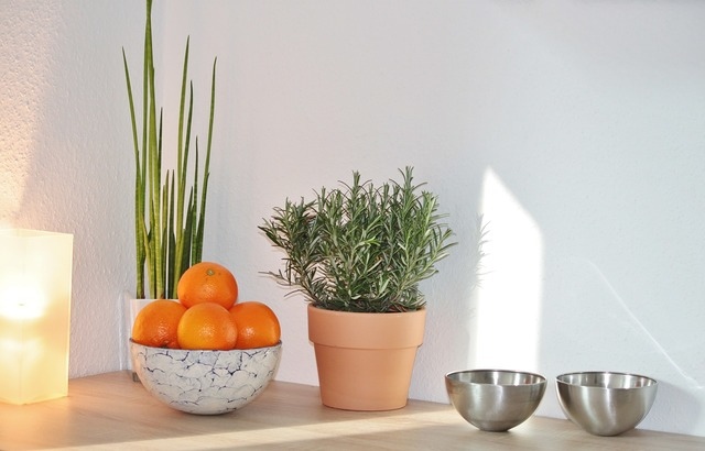 Still life decoration culinary herbs, nature landscapes.