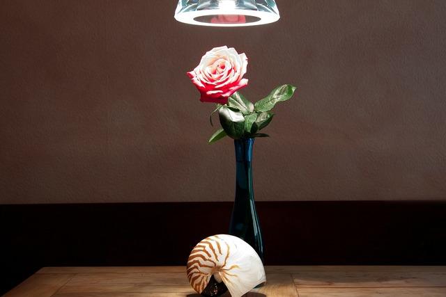 Still life vase nautilus.