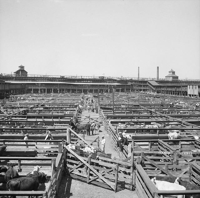Stockyards livestock beef.