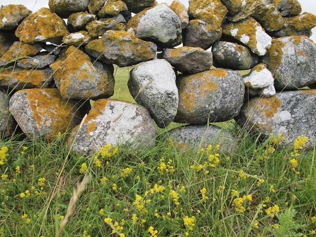 Stone wall gotland summer.