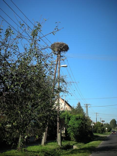 Stork stork nest nest, transportation traffic.
