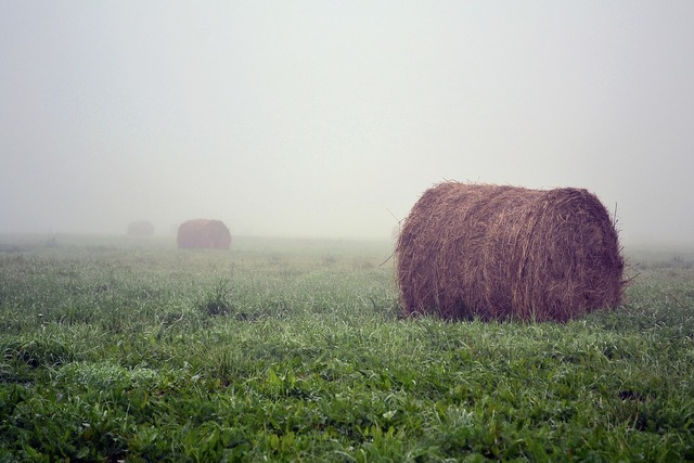Straw meadow morning, nature landscapes.