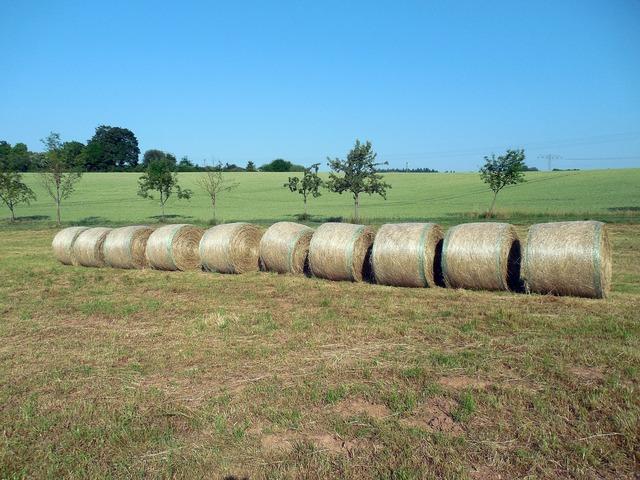 Straw straw bales round bales.