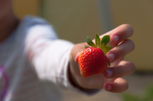 Strawberries hand child, people.