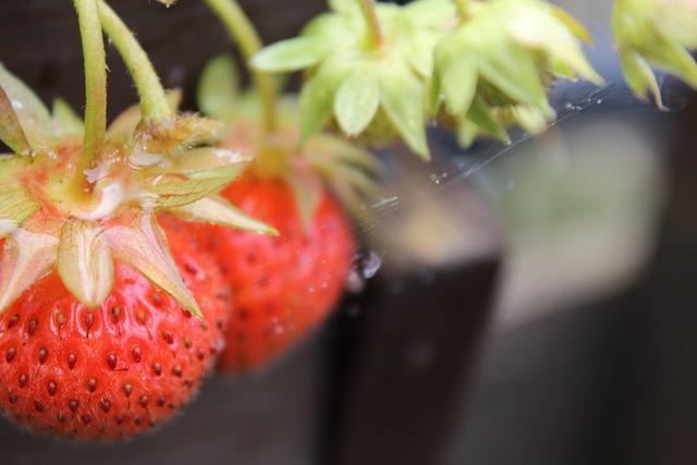 Strawberries vine homemade, food drink.