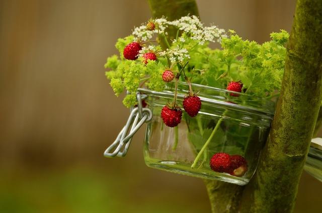 Strawberries wild strawberries walder berries.