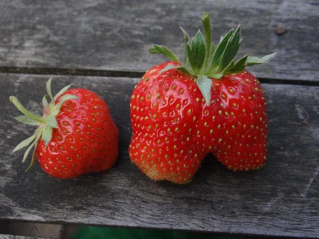 Strawberry berry summer.