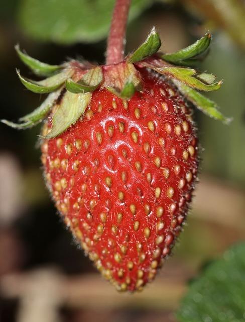 Strawberry fragaria food, food drink.