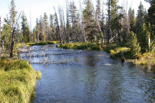 Stream creek river.