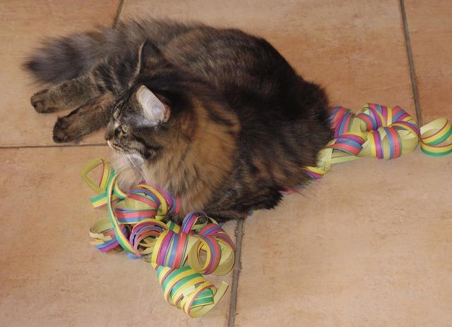 Streamer cat lying, animals.