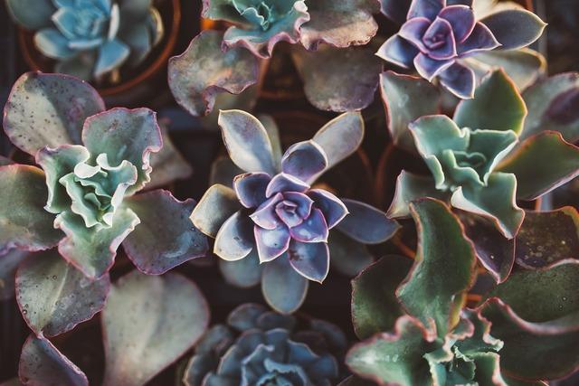 Succulent plant gardening, nature landscapes.