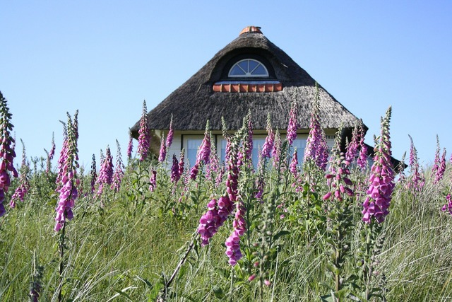 Summer cottage foxglove dunes.