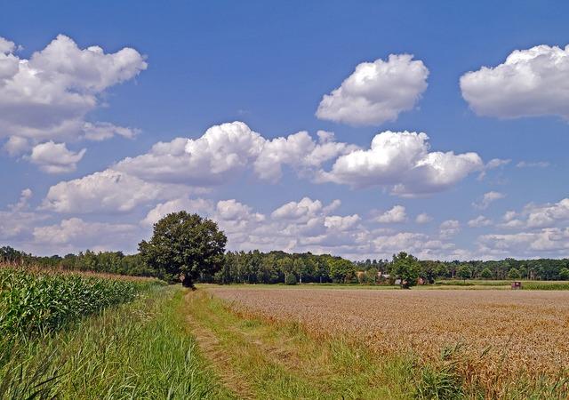 Summer day land rural, nature landscapes.