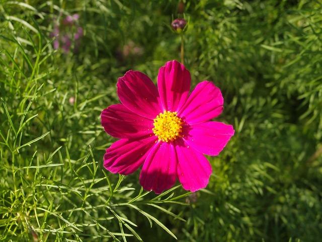 Summer flowers flower bed.