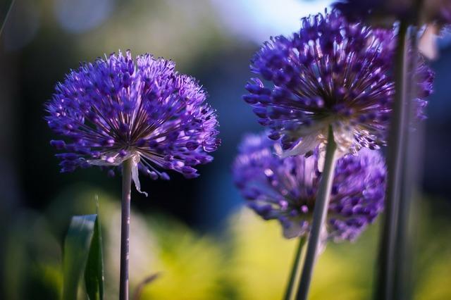 Summer flowers purple.