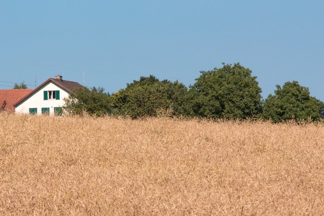 Summer summer day field.
