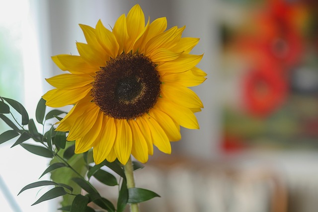 Sun flower colorful color, nature landscapes.