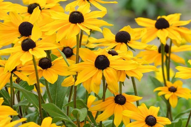 Sun hat yellow yellow flowers.