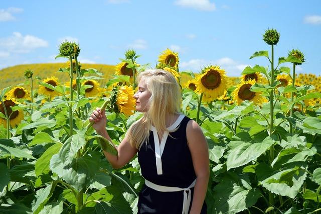 Sunflowers blond girl, people.