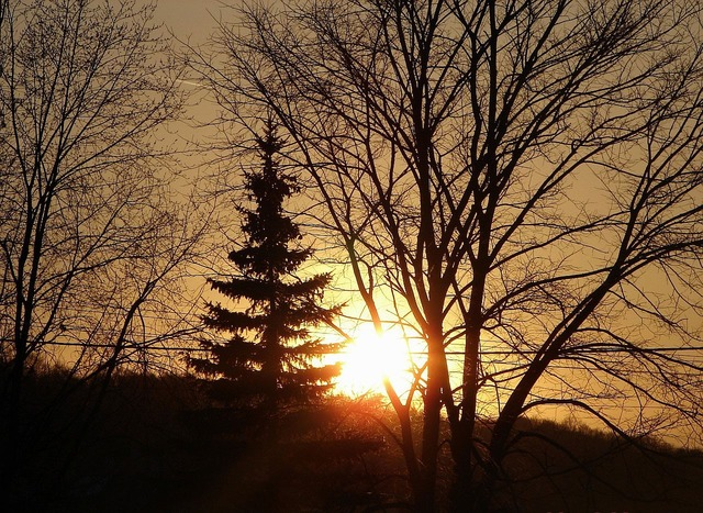 Sunrise silhouette trees, nature landscapes.