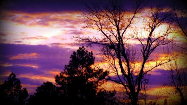 Sunset backlight trees, travel vacation.