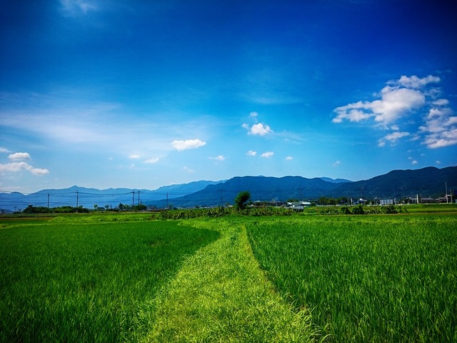 Tanaka yamada's rice fields the countryside.