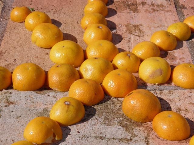 Tangerine star fruit, food drink.