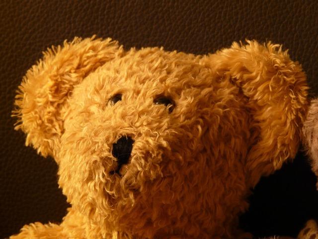 Teddy bear soft fluffy.