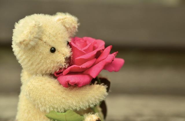 Teddy teddy bear rose, emotions.