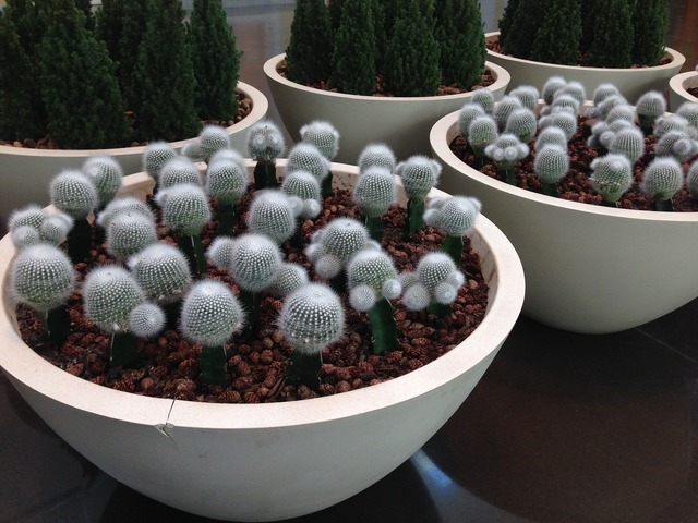 Texas cactus mall, nature landscapes.